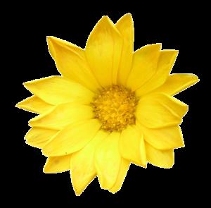 Mother's Day Brunch Flower
